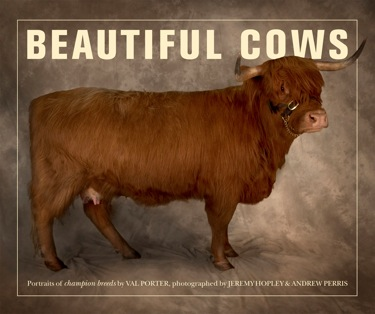 Beautiful Cows.jpg