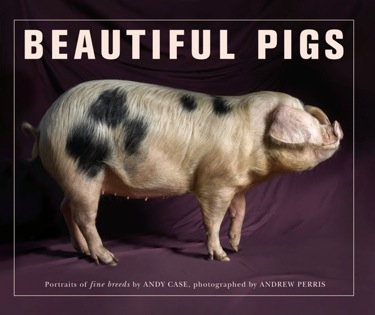 Beautiful Pigs.jpeg