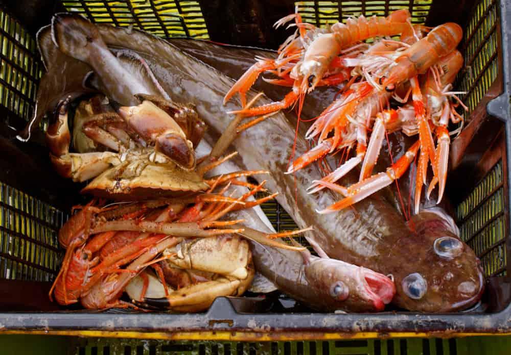 Seafood the Applecross Inn Scotland