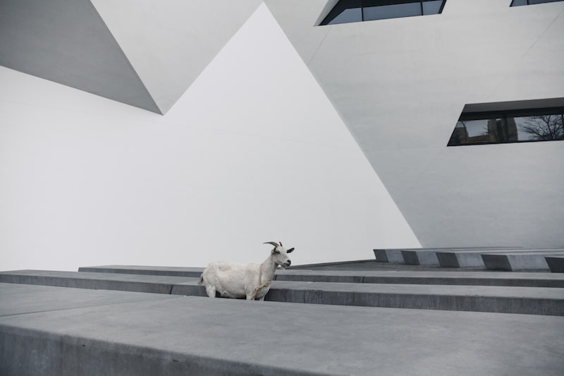 City Goats AW17 collection Connection