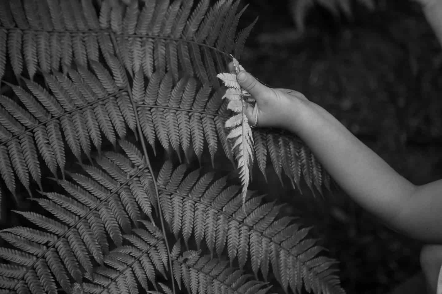 Carbon Soldier New Zealand fern nature